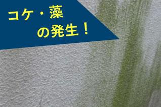 コケ・藻の発生!